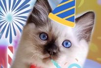 Ragdoll and Bengal Congresses | Jazzy Cats 2019